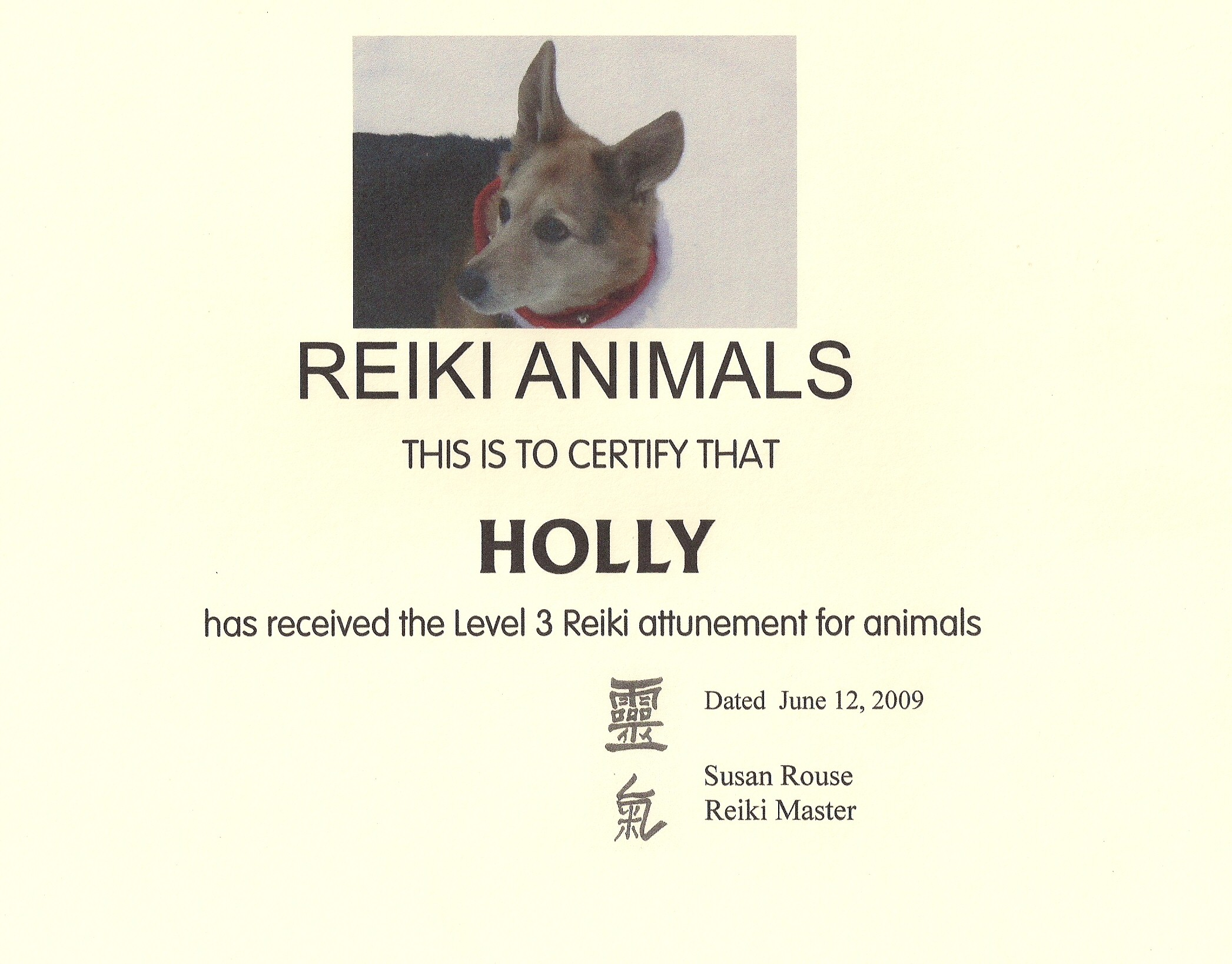 Holly the Reiki Dog