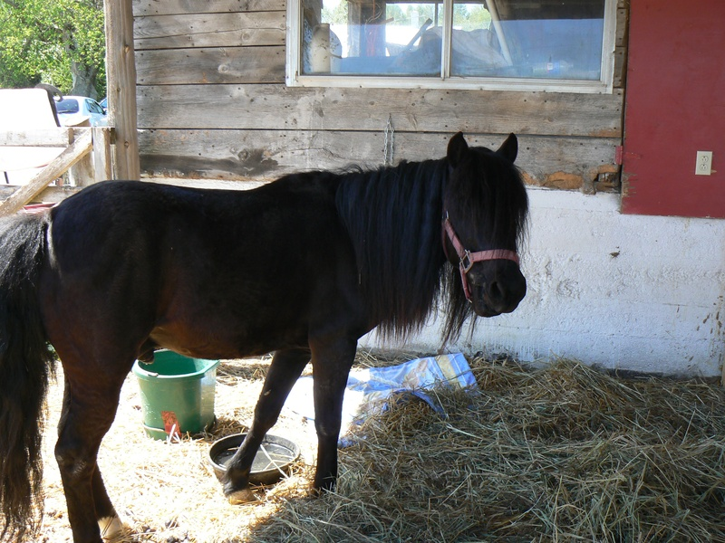 Sam the pony