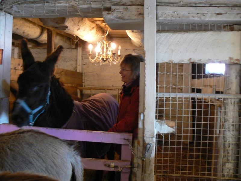 Amos receiving Animal Reiki