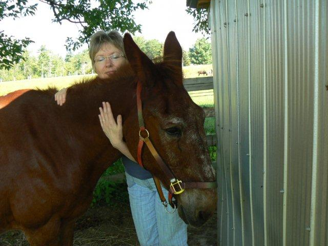 Russel the mule and Susan enjoying their Reiki time together