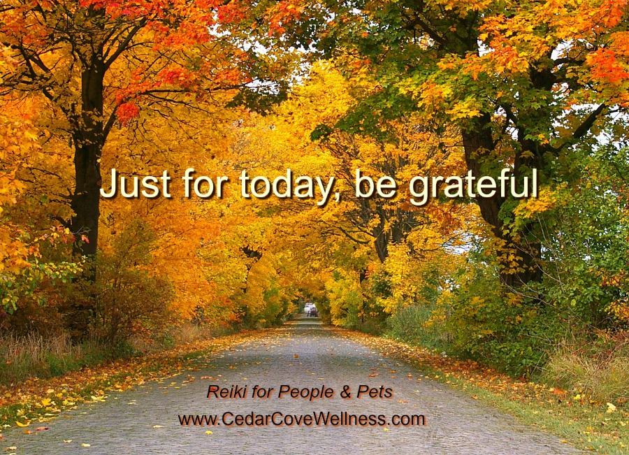 Just for today be grateful