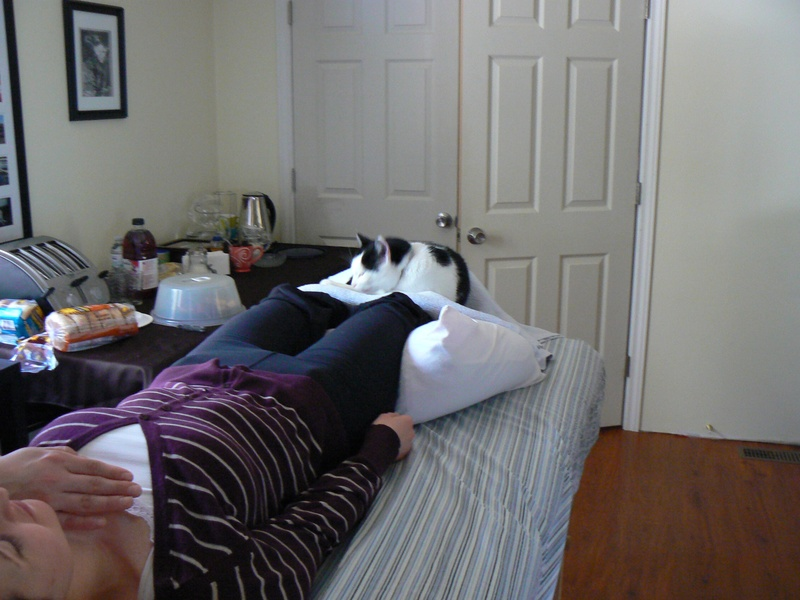 Eddie the Reiki cat joined in the First Degree Reiki session