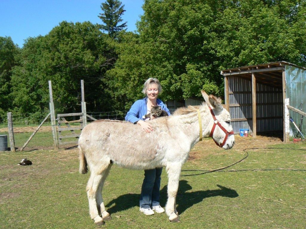 Susan Rouse with Maris the cat and Simon donkey both receiving Animal Reiki