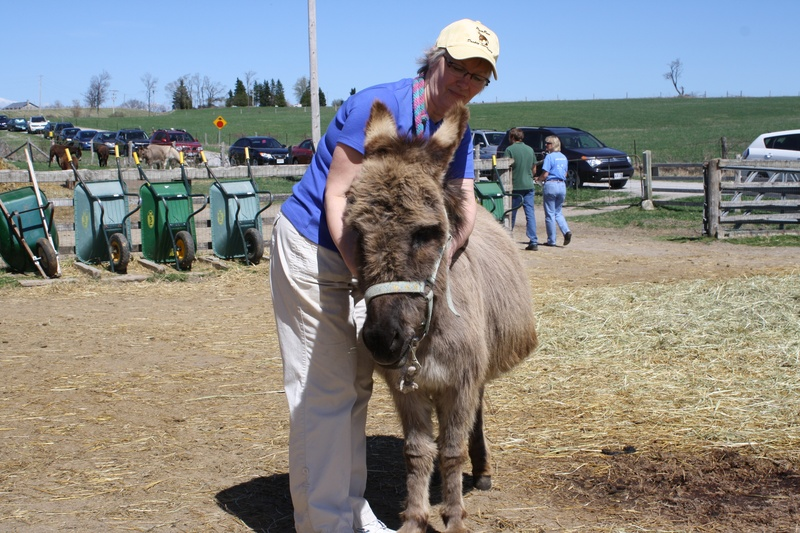 Animal Reiki Teacher Susan at Donkey Education Day demonstrating Equine Reiki with PrimRose the donkey